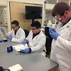 SEAN HORGAN/Staff photo<br /> Working to prepare samples during class lab work at the Gloucester Biotechnology Academy are, from left, Tyler Favalaro, Wellington Caldas and Nick Ciluffo, all of Gloucester.