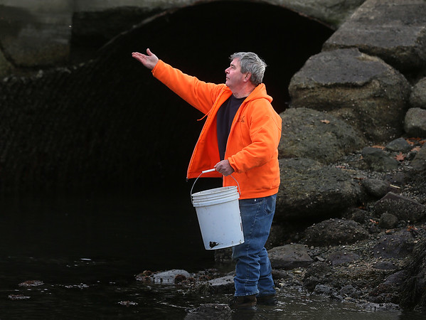 Oysters Released in Gloucester