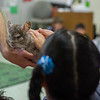 AMANDA SABGA/Staff photo <br /> <br /> Students pet a chinchilla during a visit from Curious Creatures at the Veterans' Memorial School in Gloucester. <br /> <br /> 10/23/18