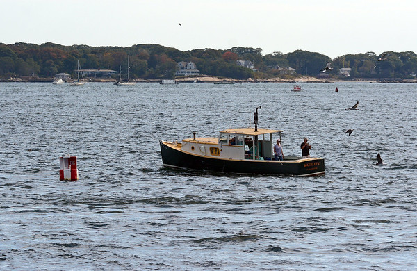 RYAN HUTTON/ Staff photo<br /> A fishing boat is surrounded by sea birds in the Western Harbor off Gloucester on Thursday.