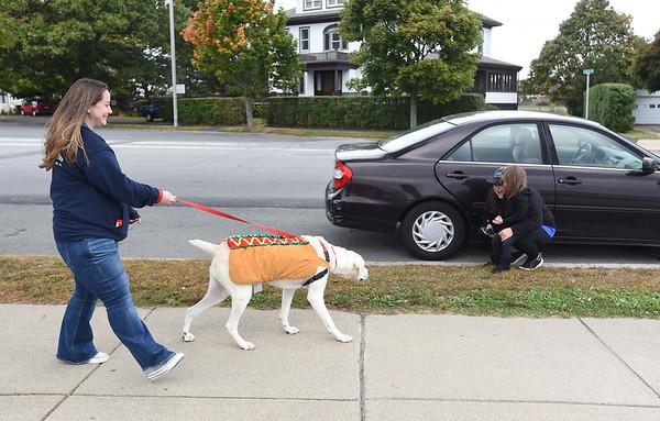 Pet Adoption Parade