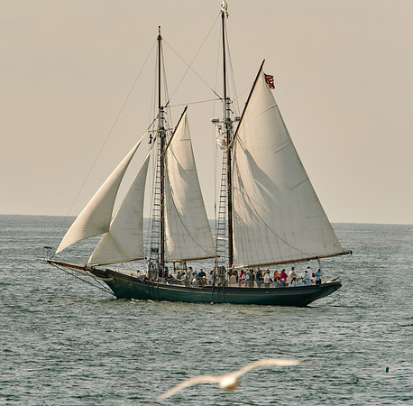 The Thomas E. Lannon in the parade of Schooner ships in Gloucester, Sunday, September 2, 2018. Jared Charney / Photo