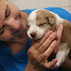 New Puppies at Cape Ann Animal Aid