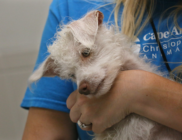 Pets from the Hurricane Zones