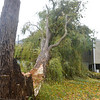 Gloucester: 95 year old Adel Kelly was not home Monday afternoon when a 60 to 70 foot tree came crashing into her 269 Washington St her home. A member of the family had said that Adle didn't want to leave her home when asked to stay with relitives the day before the storm, but finally agreed. The home suffered which seemed to be minor damage because of a cherry tree that was in front of it, taking part of the inpact.  Desi Smith/Gloucester Daily Times. October 29,2012.
