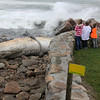 Allegra Boverman/Gloucester Daily Times. The finback whale that washed ashore in Rockport has moved closer, as a result of the hurricane, up to the path and homes along Penzance Road. People were still coming to look at it during the hurricane on Monday.