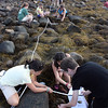 MARIA UMINSKI/Gloucester Daily Times. New England Aquarium researcher Anita Metzler assists Meg Davis, 13, of Carlisle and Clayton Mears, 14 of Brookline, as they begin classifying the marine life in their sectioned off quadrant of the Eastern Point Yacht Club shore line in Gloucester at low tide. The New England Aquarium Day Camp campers were at the Eastern Point Yacht Club to study the diversity of marine life in rocky intertidal zones of New England for the Census of Marine Life.