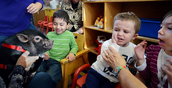 """MIKE SPRINGER/Gloucester Daily Times<br /> Michael Smith, right, and Mohammad Malik take a close-up look at Paisley the pig during a special visit Thursday at the pre-school at Fuller Elementary School in Gloucester. Paisley is a five-month-old """"micro-mini"""" pig who was brought in by its owner, Karin O'Donnell of Gloucester, as part of the """"Farm Week"""" festivities at the pre-school."""