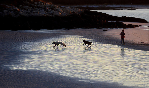 """MIKE SPRINGER/Gloucester Daily Times<br /> """"At low tide one late November afternoon on Lighthouse Beach in Annisquam, the sand had an interesting ripple pattern. The sun had just gone down. A local woman, Lida Bernard, stood watching as a neighbor's dog chased her dog across the wet sand."""""""