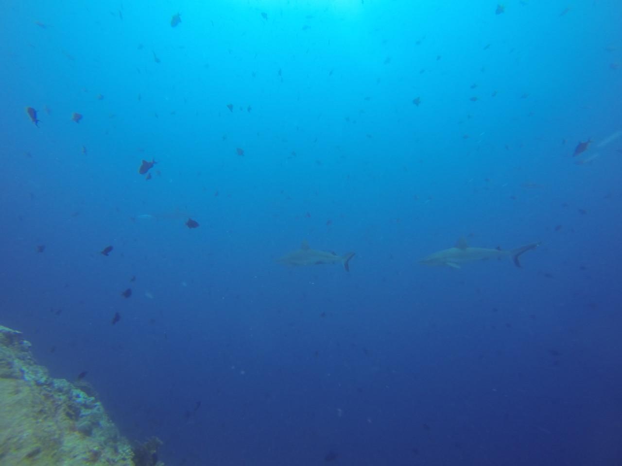 Dive 7 潛點:Blue Corner