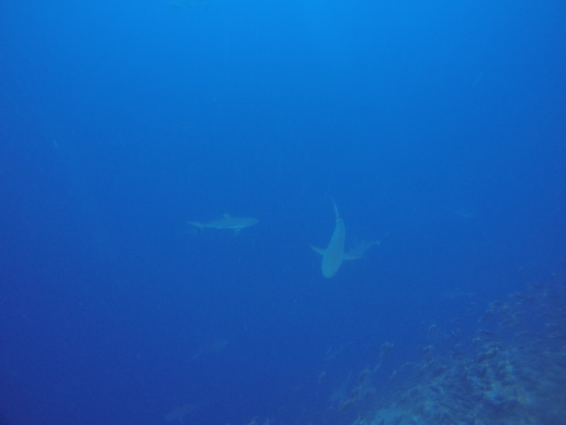 Dive 6 潛點:Blue Corner