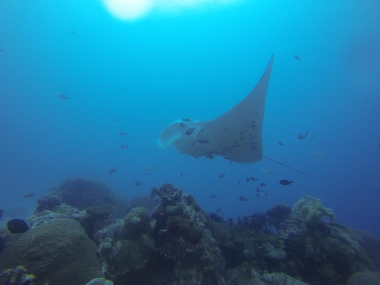 Dive 4 潛點:German Channel