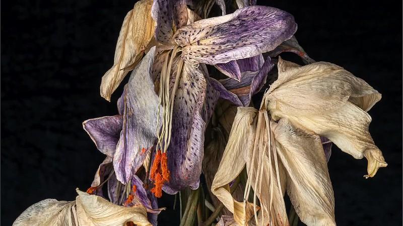 Lilies Beyond by David Rutter ARPS ©2020