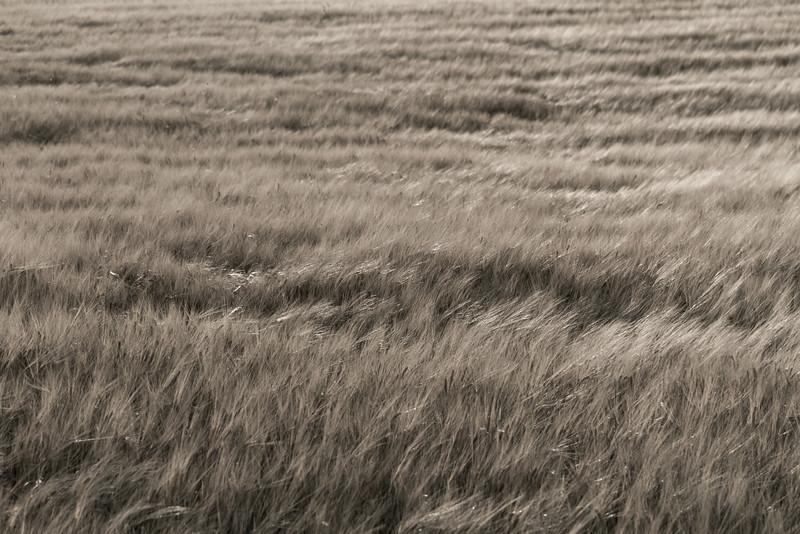 ferring_bovbjerg_2014-07-30_0018