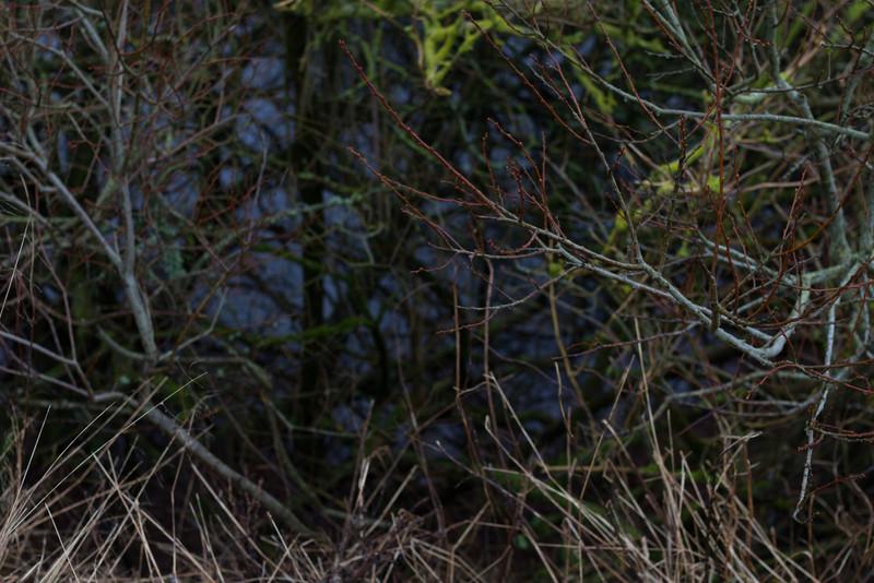 vemb_nörre_vosborg_2013-01-05_0042