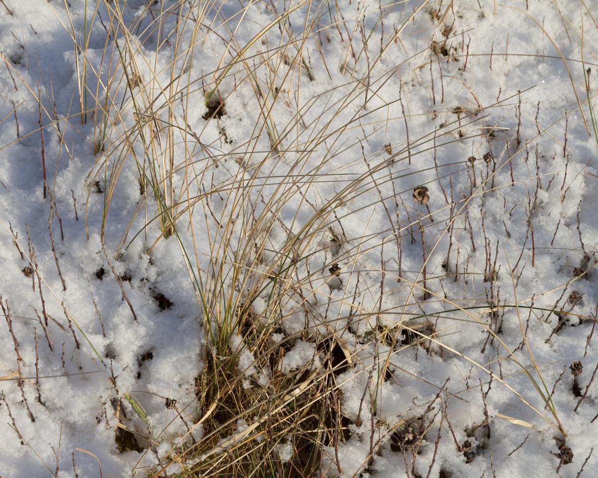 lodbjerg_2013-01-19_0058