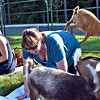 Doing Goat Yoga at Rollstone Bank in Groton is Chelsea Hudson of Lunenburg and Cheryl Prentiss of Leominster with a goat jumping off her back with others all around. SUN/ David H. Brow