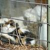 The cats enjoying their warming chamber.