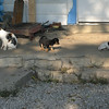 Porch Pretty Kitty, Teddy Bear and Bob