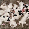 Did I Say 9 Pups?