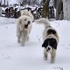 More Snow ---- Yawn.
