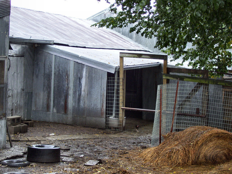 New sheep shed from the South-west.