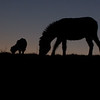 Sheep and Donkey Silhouette