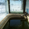 "(6 of 10) Solar Stock Tank Inside Thawed<br /> Several years ago I enclosed an old bathtub in glass to make a solar stock tank for the goats to have water that's not to hard to drink in the winter time. The back of the barn is facing to the South-east so it catches the sun from the time it comes up to when it goes down. It can be 0°F and by 9 or 10 o'clock it will be thawing around the edges inside. I do have to chop out some ice but then it will keep it open so they can drink. When it is cloudy for a week at a time it don't work to well but when the sun shines it is great, You've heard of ""a bull in a china closet"", Well a Billy in a glass house is about as bad. That is why I have the cattle panel out from the glass side, to keep the Billie's away from the glass, The end is from a bank window, about 1 ¼"" thick, they can't hurt that. The glass I had was longer than the tub so I put wool at the end that the cats go in to lie on and warm up in the sun shine. The pipe going in is in line with the pump on the South-west side of the barn, I use that to keep it full. The snow on top will pretty well melt off in 1 or 2 days of sunshine"
