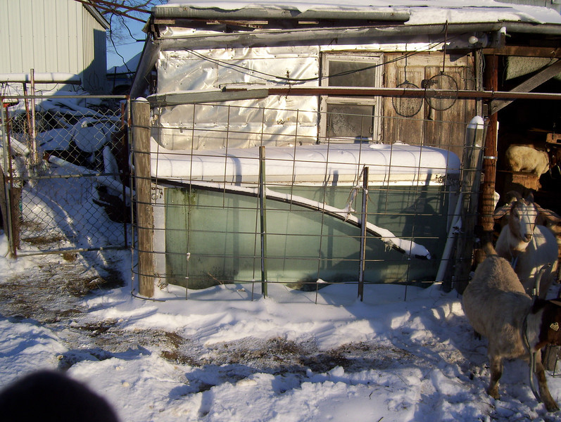"(1 of 10) Solar Stock Tank Heater, Frosted over<br /> Several years ago I enclosed an old bathtub in glass to make a solar stock tank for the goats to have water that's not to hard to drink in the winter time. The back of the barn is facing to the South-east so it catches the sun from the time it comes up to when it goes down. It can be 0°F and by 9 or 10 o'clock it will be thawing around the edges inside. I do have to chop out some ice but then it will keep it open so they can drink. When it is cloudy for a week at a time it don't work to well but when the sun shines it is great, You've heard of ""a bull in a china closet"", Well a Billy in a glass house is about as bad. That is why I have the cattle panel out from the glass side, to keep the Billie's away from the glass, The end is from a bank window, about 1 ¼"" thick, they can't hurt that. The glass I had was longer than the tub so I put wool at the end that the cats go in to lie on and warm up in the sun shine. The pipe going in is in line with the pump on the South-west side of the barn, I use that to keep it full. The snow on top will pretty well melt off in 1 or 2 days of sunshine"