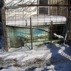"(2 of 10) Solar Stock Tank Heater, Thawing<br /> Several years ago I enclosed an old bathtub in glass to make a solar stock tank for the goats to have water that's not to hard to drink in the winter time. The back of the barn is facing to the South-east so it catches the sun from the time it comes up to when it goes down. It can be 0°F and by 9 or 10 o'clock it will be thawing around the edges inside. I do have to chop out some ice but then it will keep it open so they can drink. When it is cloudy for a week at a time it don't work to well but when the sun shines it is great, You've heard of ""a bull in a china closet"", Well a Billy in a glass house is about as bad. That is why I have the cattle panel out from the glass side, to keep the Billie's away from the glass, The end is from a bank window, about 1 ¼"" thick, they can't hurt that. The glass I had was longer than the tub so I put wool at the end that the cats go in to lie on and warm up in the sun shine. The pipe going in is in line with the pump on the South-west side of the barn, I use that to keep it full. The snow on top will pretty well melt off in 1 or 2 days of sunshine"