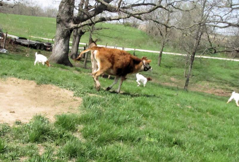 Shasta, Off at a Run