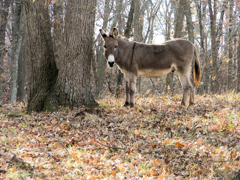 """It's That Time of Year Where Things are """"Mainly One Color"""", -- Shades of Brown."""