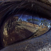 The World From the Eye of an Ass #4a