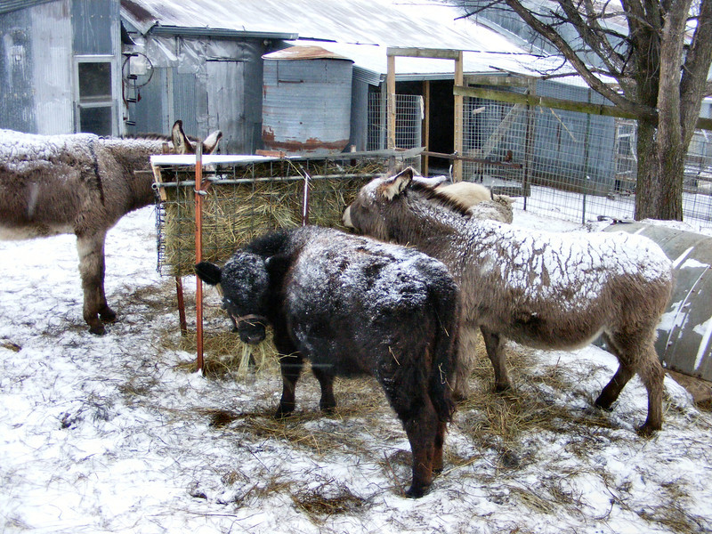 """The Thing With The """"Winter Season"""" Is; The Animals Keep Getting A New Coat."""