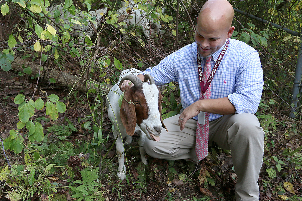 . The Chelmsford Parker Middle School courtyard is overgrown. So the school has hired a herd of goats to clear it out. They arrived Tuesday afternoon and will be at the school for the next week or two. Principal Jeff Parks pets one of the goats on Wednesday in the courtyard. SUN/JOHN LOVE