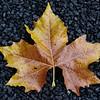 Autumn plane tree leaf on a grave I