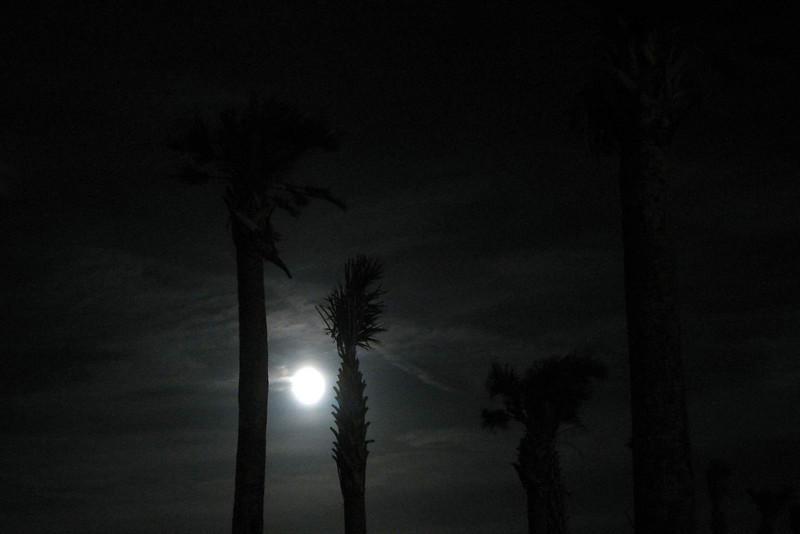 Full moon between the palms at MarineLand