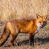 Fox 7282