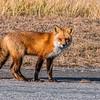 Fox 7281