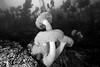 Giant plumose anemone, Metridium farcimen<br /> Frank's Rock, Browning Pass, British Columbia