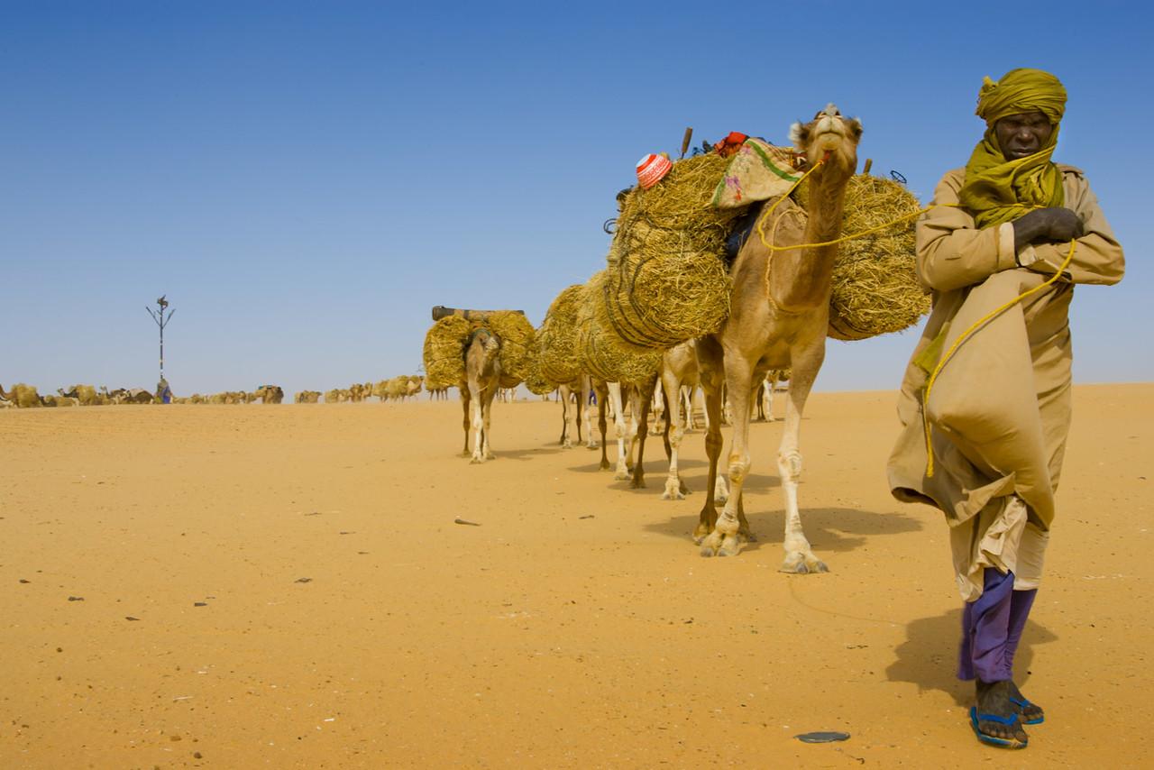 Caravan going to Bilma to collect salt.