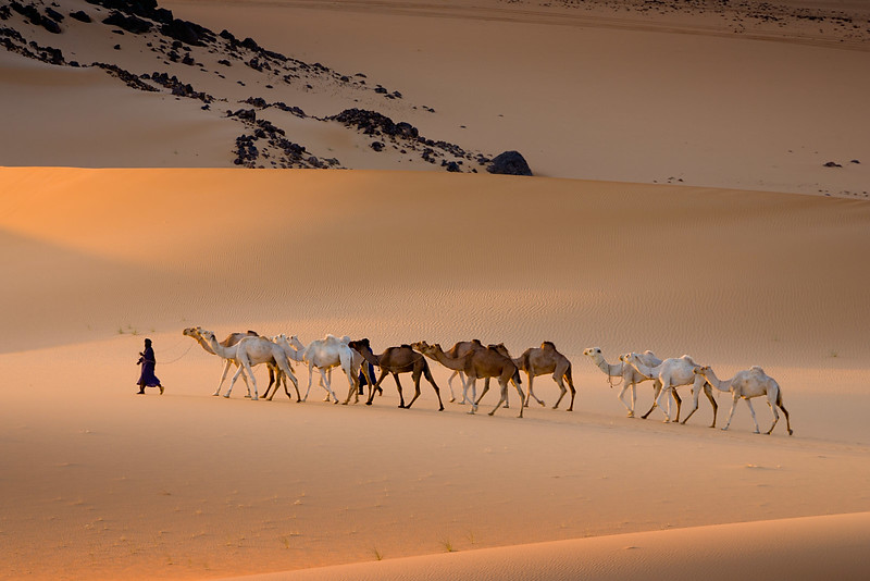 Passing camels. Arakaou. Near the Aïr Mountains.