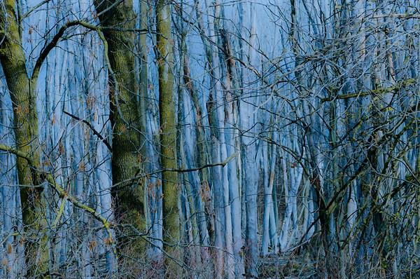 Blue Woods
