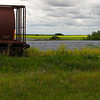 Rail cars and fields of flax