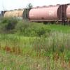 Rail cars waiting for the grain harvest