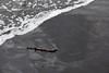 Gold Coast Beaches (Miami) Erosion Feb 24th 2013 (19)