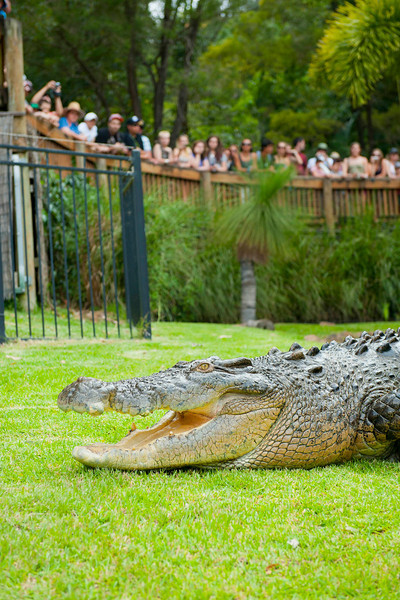 Currumbin Wildlife Sanctuary - Crocodile show