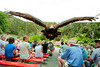 Currumbin Wildlife Sanctuary - Wild Native Bird Show