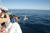 Gold Coast Whale Watching with Whales in Paradise