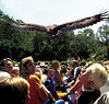 Currumbin Wildlife Sanctuary - Free flight bird show